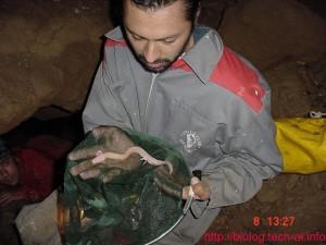 Amfibi Proteus anguinus