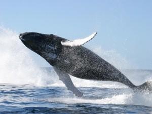 Balena e kalter pamje 1