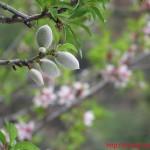 Fruti bajames