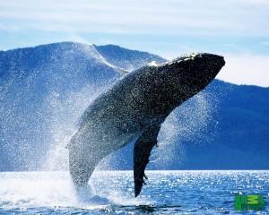 Balena e Kalter