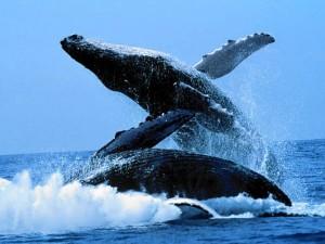 Balena e kalter pamje 3