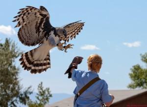 Harpy Eagle Luigi Trish