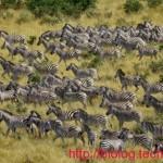 mirgrimi zebrave 3