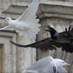Pellumbi paqes sulmohet nga korbi