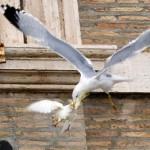 Pellumbi paqes sulmohet nga pulebardha