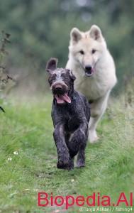 Ujku eshte me i mire se sa qeni!