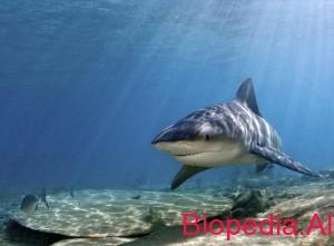 Peshkaqenet notare te ujrave te embla ne lumenj dhe ne liqene